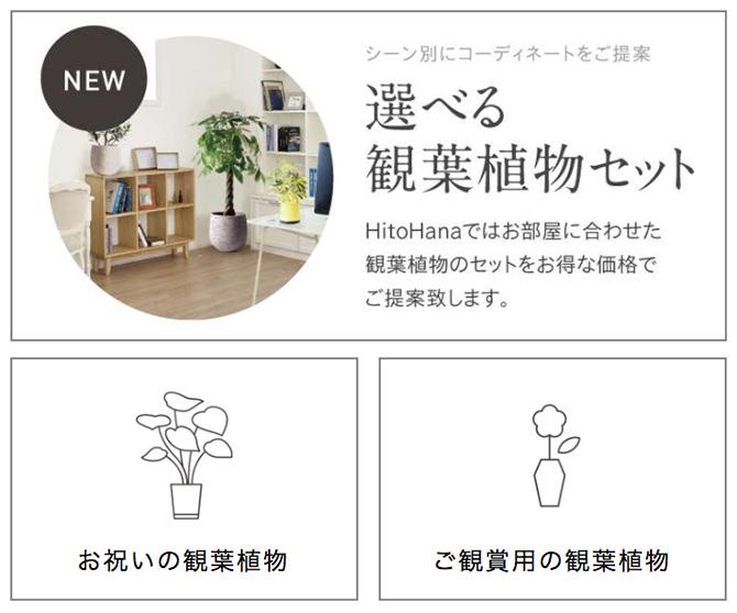 観葉植物通販HitoHana2_baku-blog.com