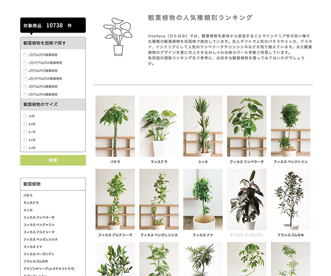 観葉植物通販HitoHana3_baku-blog.com