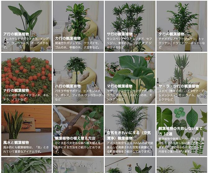 観葉植物通販ブルーミングスケープ2_baku-blog.com