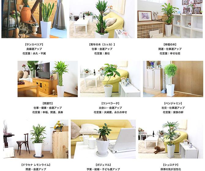 観葉植物通販ブルーミングスケープ3_baku-blog.com