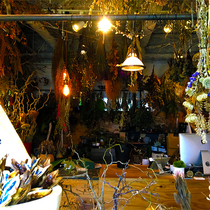 baku-blog_観葉植物_targetplants3