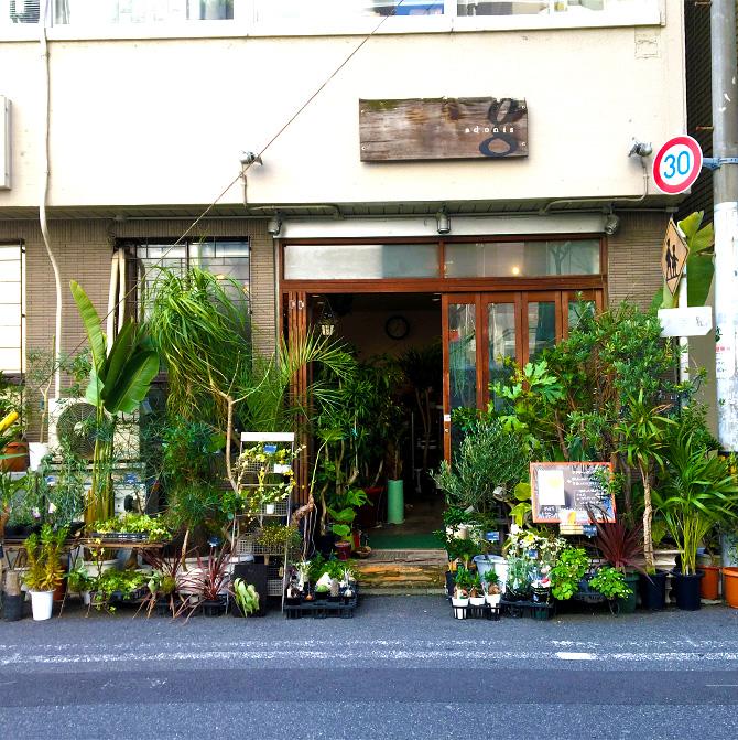 baku-blog_観葉植物_アドニスg