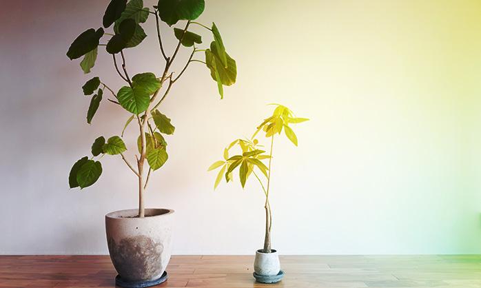 観葉植物のおすすめ通販サイト_baku-blog.com