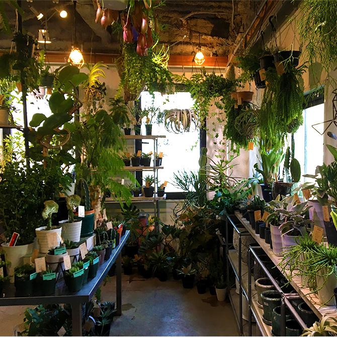 baku-blog_観葉植物_targetplants2